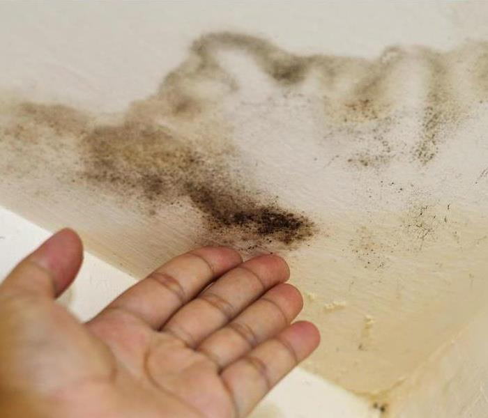 Mold And Water Damage To A Ceiling